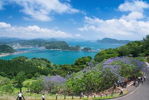 ジャカランダ咲く日南海岸の写真素材 [FYI01784344]