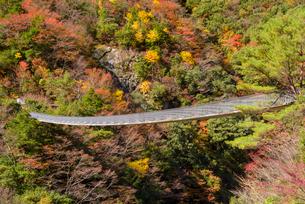 秋の梅の木轟公園吊り橋の写真素材 [FYI01784354]
