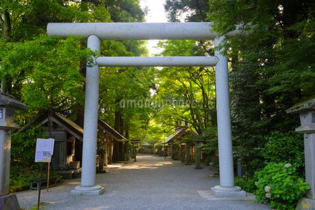 天岩戸神社参道の写真素材 [FYI01784514]
