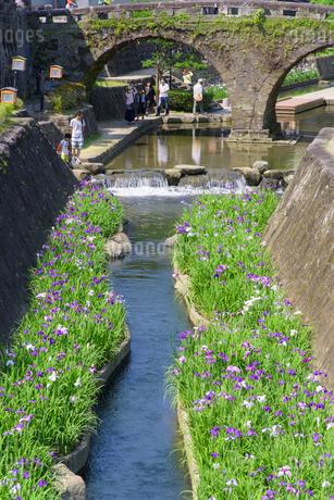 高瀬裏川花菖蒲祭りの写真素材 [FYI01784550]
