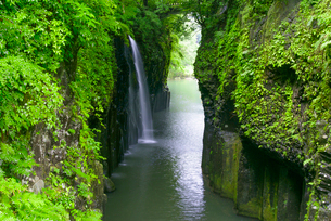 初夏の高千穂峡真名井の滝の写真素材 [FYI01784622]