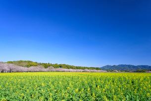 春の西都原公園の写真素材 [FYI01784647]