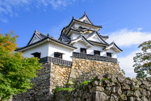 秋の彦根城の写真素材 [FYI01784649]