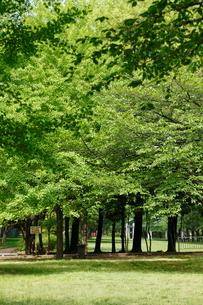 赤塚公園の写真素材 [FYI01784684]