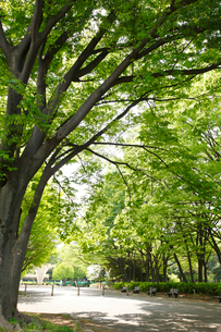 赤塚公園の写真素材 [FYI01784708]