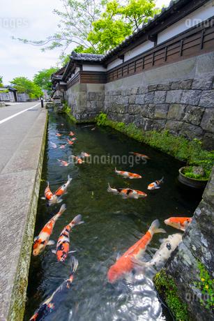 飫肥鯉の風景の写真素材 [FYI01784726]