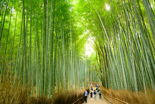 京都 嵯峨野の竹林の写真素材 [FYI01784788]