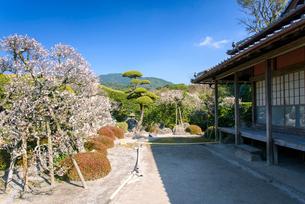 梅と武家屋敷庭園の写真素材 [FYI01784795]