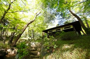 殿ヶ谷戸庭園の写真素材 [FYI01784816]