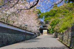 春の飫肥城大手門の写真素材 [FYI01784818]