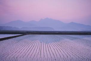 金峰山と水田の朝の写真素材 [FYI01784831]