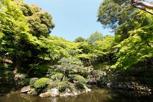 殿ヶ谷戸庭園の写真素材 [FYI01784879]