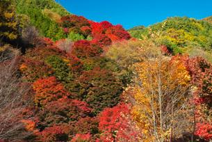 もみじ湖の紅葉の写真素材 [FYI01784916]