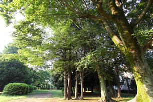 赤塚公園の写真素材 [FYI01784918]