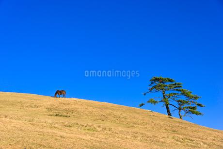 都井岬の岬馬の写真素材 [FYI01784937]