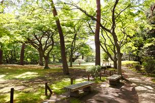 殿ヶ谷戸庭園の写真素材 [FYI01784948]
