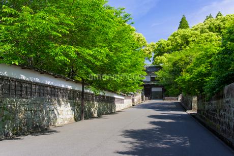 新緑の飫肥城大手門の写真素材 [FYI01784966]