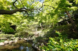 殿ヶ谷戸庭園の写真素材 [FYI01785081]