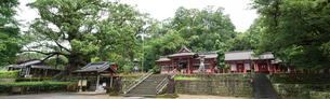 八幡神社と蒲生の大楠の写真素材 [FYI01785087]