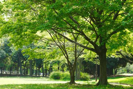 赤塚公園の写真素材 [FYI01785089]