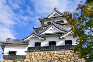 秋の彦根城の写真素材 [FYI01785124]