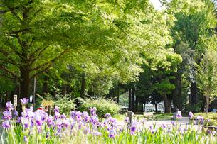 赤塚公園の写真素材 [FYI01785137]