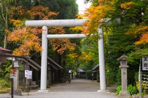 秋の天岩戸神社 鳥居の写真素材 [FYI01785139]