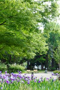 赤塚公園の写真素材 [FYI01785163]