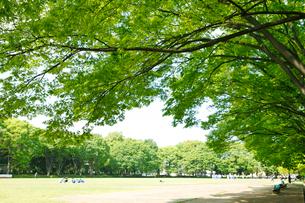 赤塚公園の写真素材 [FYI01785187]