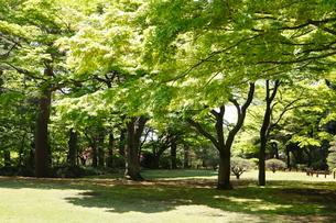 殿ヶ谷戸庭園の写真素材 [FYI01785218]