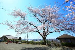 禅当寺公園の写真素材 [FYI01785356]