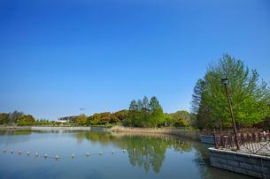 県立柏の葉公園の写真素材 [FYI01785392]