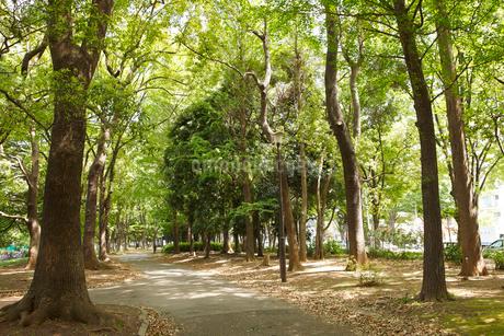 赤塚公園の写真素材 [FYI01785553]