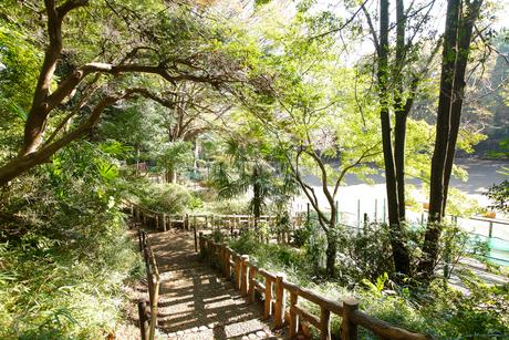 本門寺公園の写真素材 [FYI01785570]