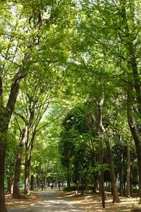 赤塚公園の写真素材 [FYI01785662]
