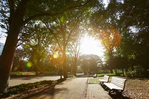 駒沢公園の写真素材 [FYI01785860]