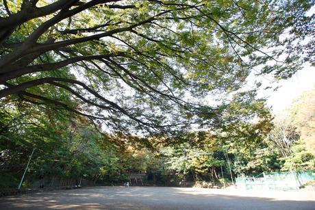 本門寺公園の写真素材 [FYI01785871]