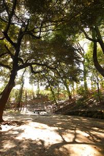 本門寺公園の写真素材 [FYI01785960]