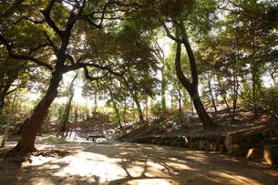本門寺公園の写真素材 [FYI01786087]
