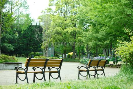 赤塚公園の写真素材 [FYI01786129]