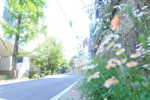 広尾3丁目の住宅地の写真素材 [FYI01786215]