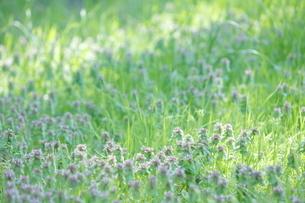 和田堀公園の写真素材 [FYI01786607]