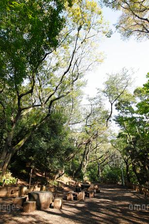 本門寺公園の写真素材 [FYI01786867]
