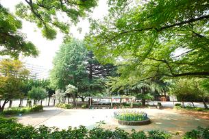 稲村西山公園の写真素材 [FYI01786929]