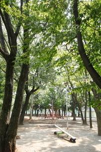 東板橋公園の写真素材 [FYI01787098]