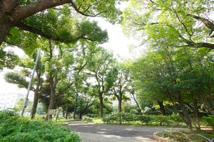 稲村西山公園の写真素材 [FYI01787650]