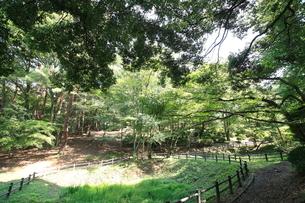 八幡山公園の写真素材 [FYI01787734]