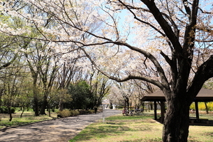 和光樹林公園の写真素材 [FYI01788644]