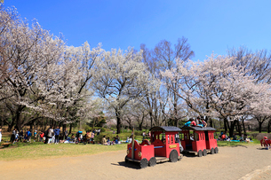 和光樹林公園の写真素材 [FYI01788883]