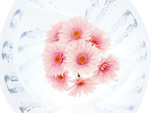 楽譜とガーベラの写真素材 [FYI01788904]